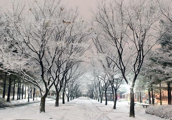Du Lịch Seoul Mùa Nào Đẹp Nhất - ảnh 8