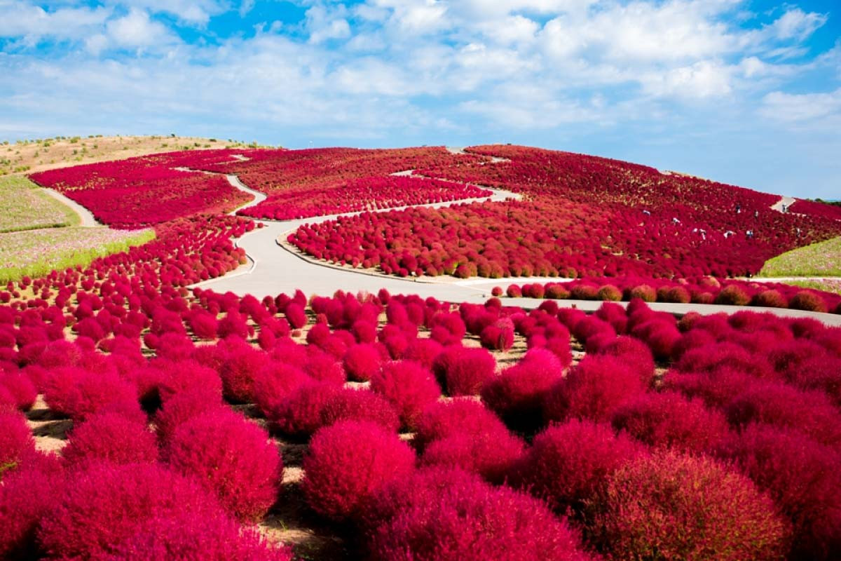 Công viên Hitachi Seaside thuộc tỉnh Ibaraki