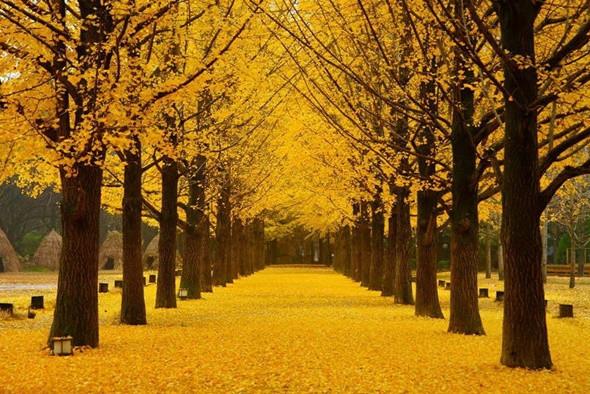Điểm danh những điểm ngắm mùa thu lý tưởng tại Hàn Quốc - ảnh 5