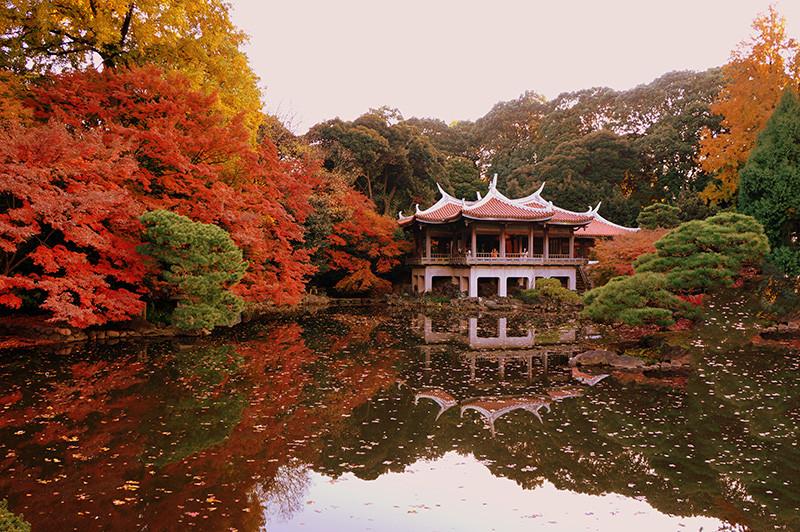 Vườn quốc gia Shinjuku Gyoen còn có hơn 10.000 cây cổ thụ