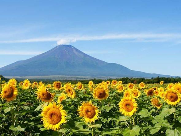 Khám phá núi Phú Sĩ – biểu tượng Nhật Bản - ảnh 3