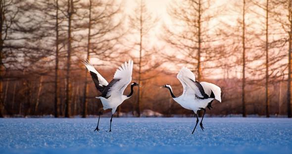 Ngỡ ngàng với vẻ đẹp Hokkaido bốn mùa -  ảnh 1