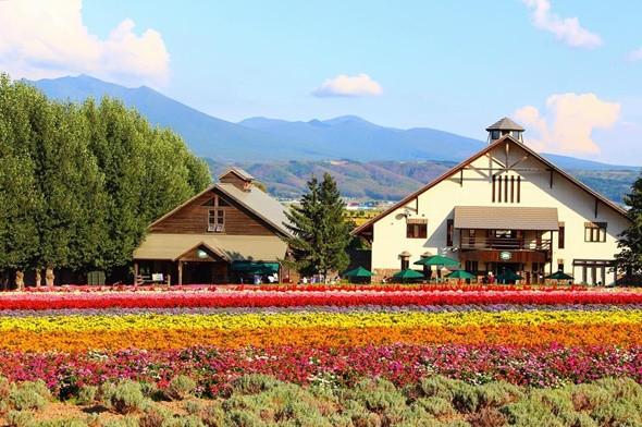 Ngỡ ngàng với vẻ đẹp Hokkaido bốn mùa -  ảnh 2