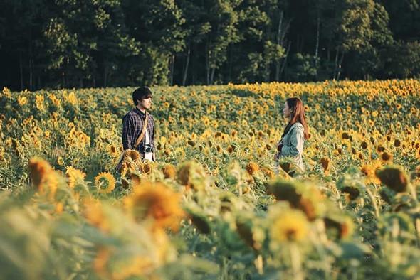 Ngỡ ngàng với vẻ đẹp Hokkaido bốn mùa -  ảnh 3