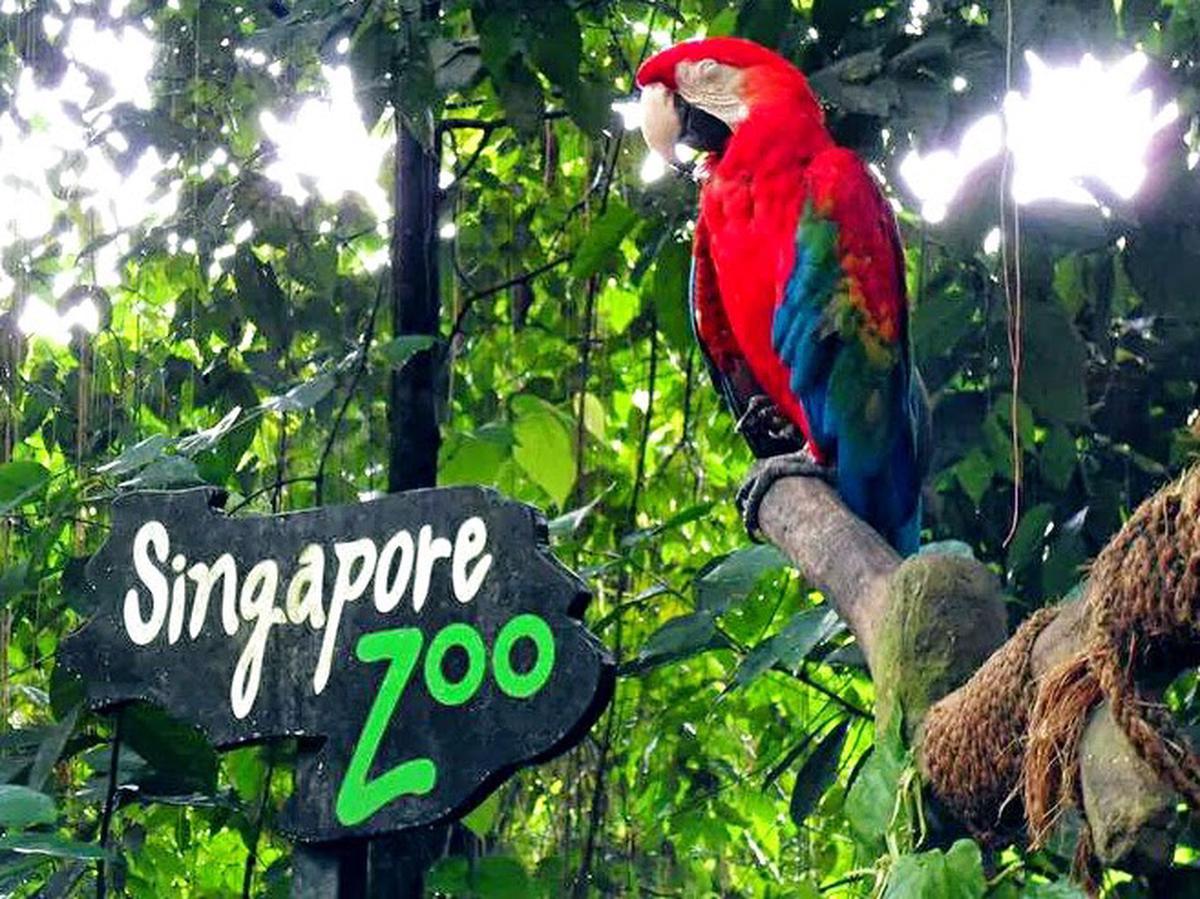 Tour du lịch liên tuyến Singapore Malaysia 6 ngày 5 đêm - Sở thú Singapore