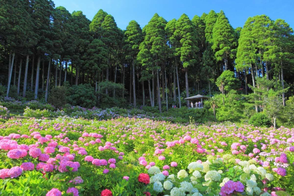 Các trải nghiệm lôi cuốn của chuyến du lịch Trùng Khánh - ảnh 4