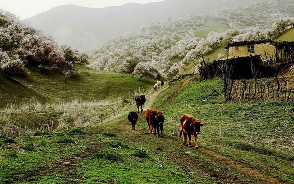 Du lịch Tân Cương - một vùng trời hoa mộng - ảnh 8