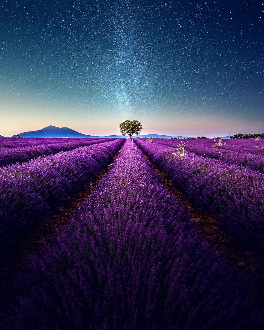 Nét đẹp thơ mộng của các cánh đồng hoa Lavender ở Pháp - ảnh 8