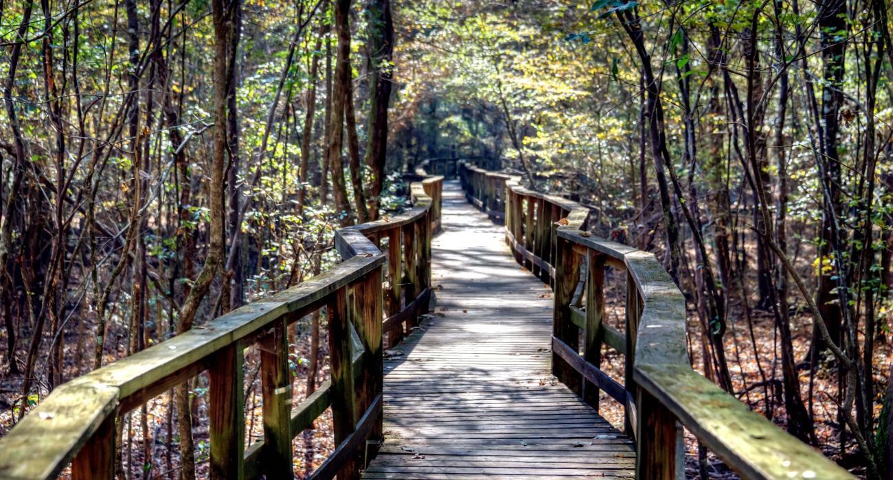 Những khu vườn quốc gia ở Mỹ tuyệt đẹp mà bạn nên tới một lần trong đời - ảnh 7