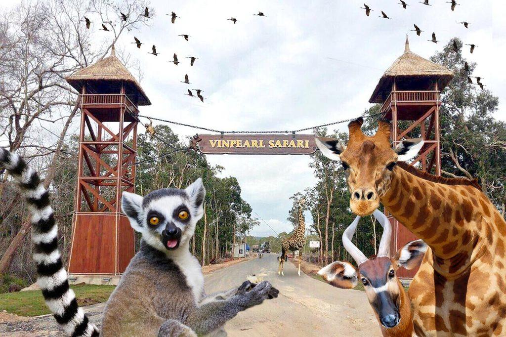 Check in10 điểm đẹp nhấtPhú Quốc - Vườn thú Safari