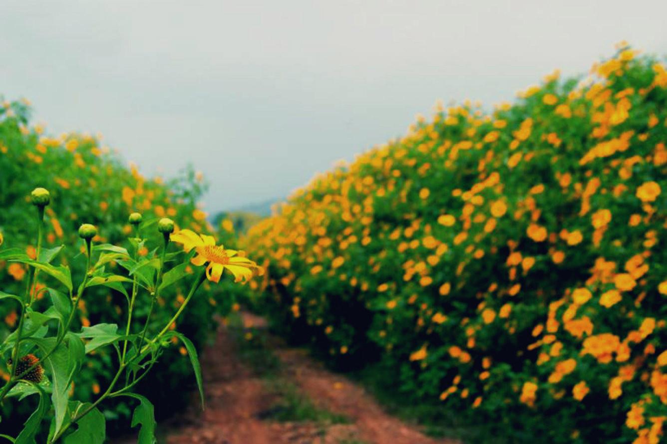 Bạn có biết mùa đẹp nhất của Đà Lạt trong năm? 4