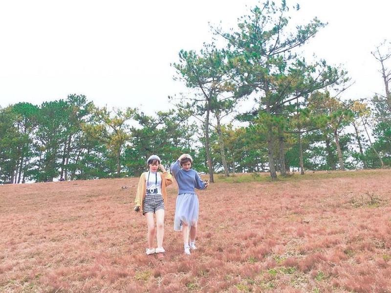 Nếu du lịch Đà Lạt thì đừng quên ghé qua cánh đồng cỏ hồng tuyệt đẹp bạn nhé! - ảnh 2