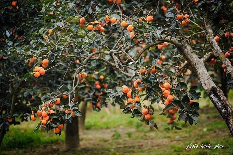 Hồng Đà Lạt - check in vườn hồng Dinh Bảo Đại