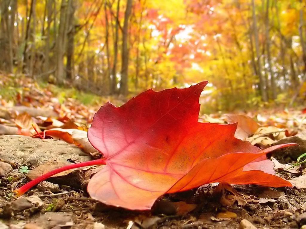 Khám phá mùa thu Nhật Bản ngay tại rừng lá phong Đà Lạt - ảnh 9