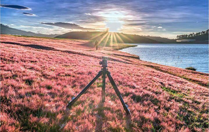Nếu du lịch Đà Lạt thì đừng quên ghé qua cánh đồng cỏ hồng tuyệt đẹp bạn nhé! - ảnh 4