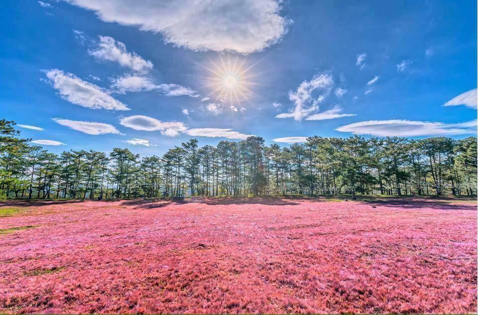 Nếu du lịch Đà Lạt thì đừng quên ghé qua cánh đồng cỏ hồng tuyệt đẹp bạn nhé! - ảnh 3