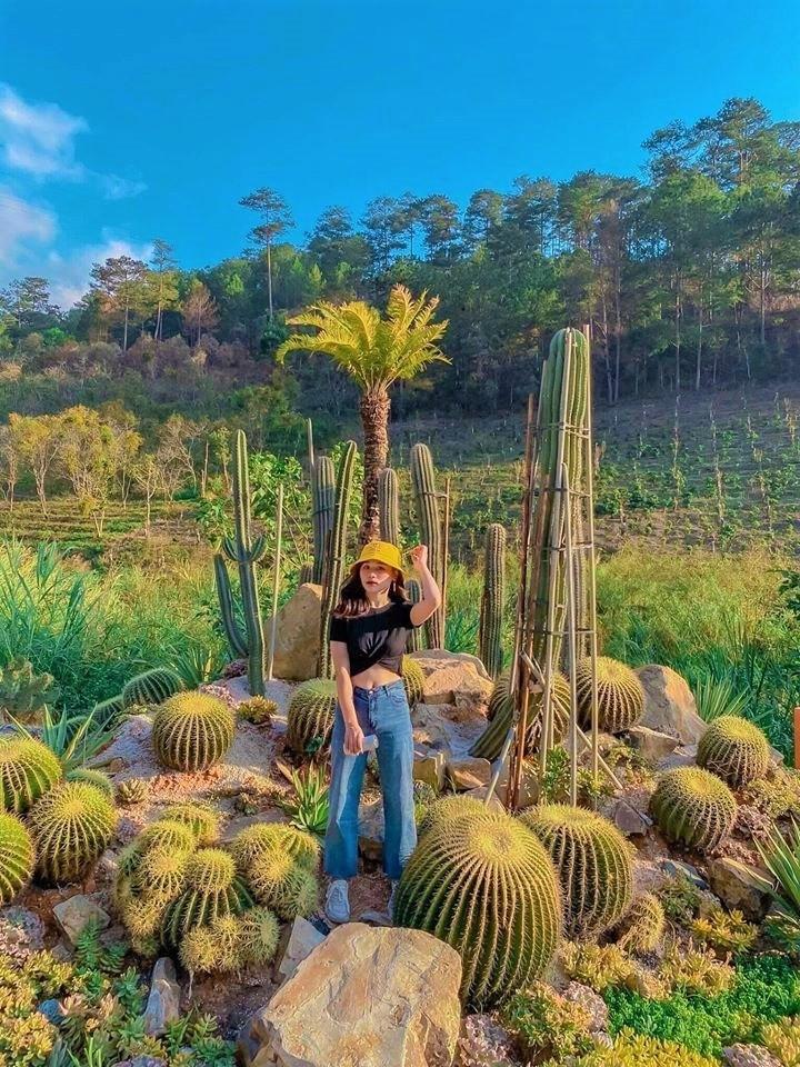 Những lưu ý khi tham quan vườn xương rồng Kombi Land