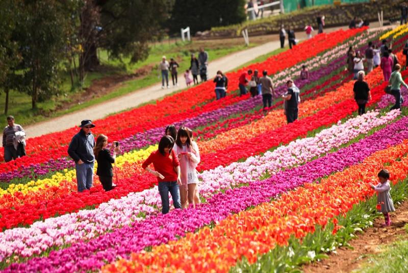 Lễ hội hoa tulip Tesselaar, Silvan