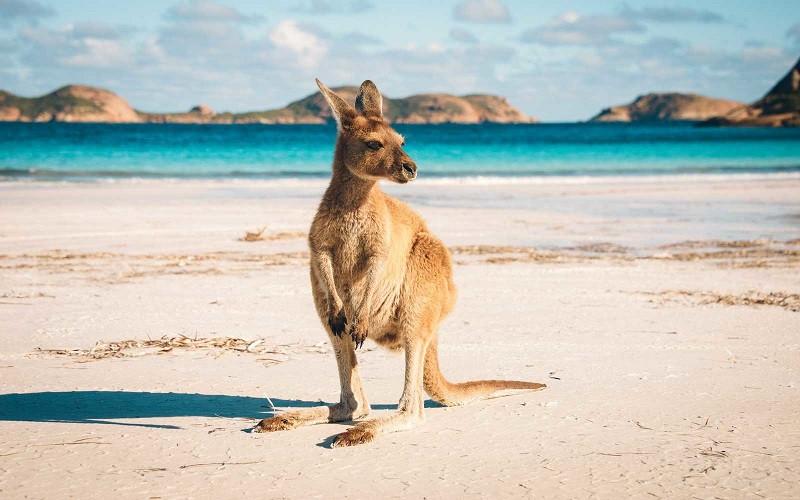 Nước Úc sở hữu rất nhiều hòn đảo hoang sơ
