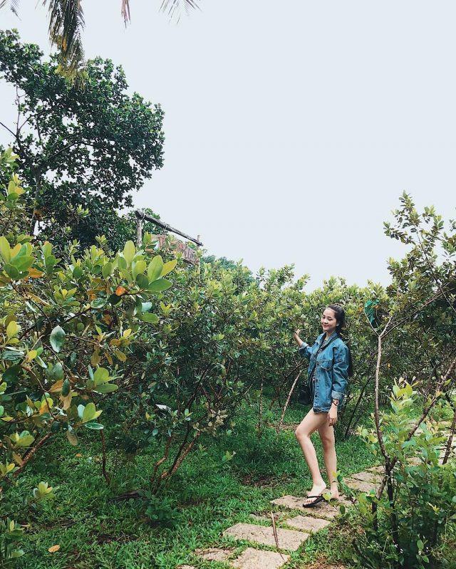 Rượu Sim Phú Quốc - món quà đặc sản của đảo ngọc - ảnh 9