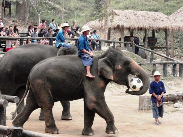 Lang thang Chiang Mai cuốn hút quên lối về - ảnh 4