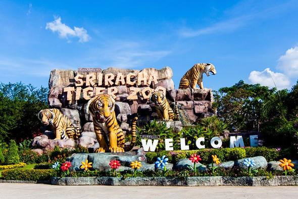 Những Điểm Tham Quan Cực Đẹp Không Nên Bỏ Qua Trong Chuyến Du Lịch Tết Thái Lan - Công viên Tiger Zoo