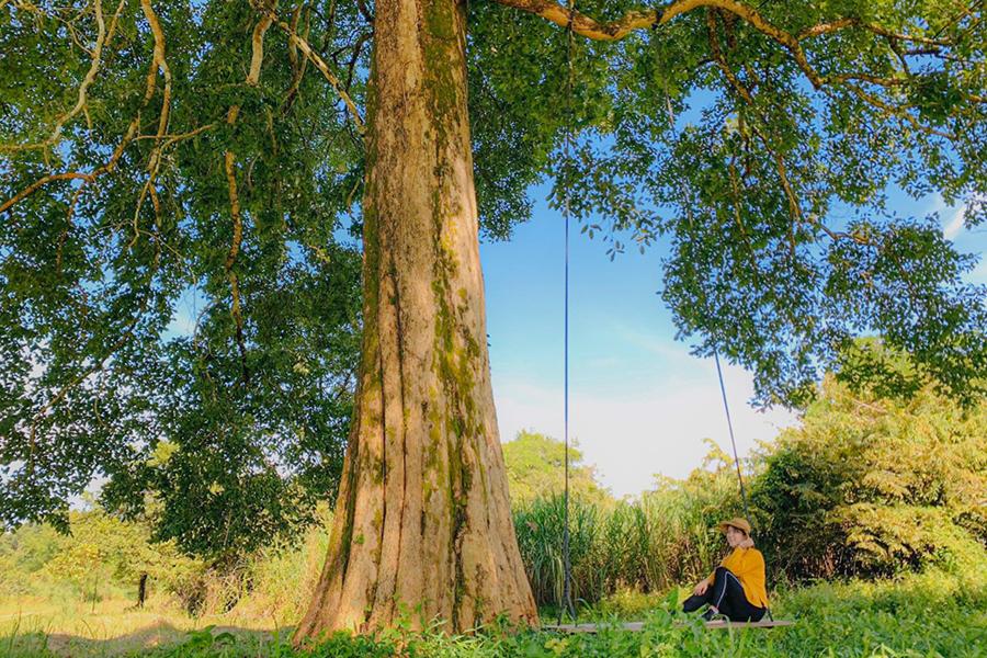 Những xu hướng du lịch xanh thân thiện với môi trường - ảnh 6