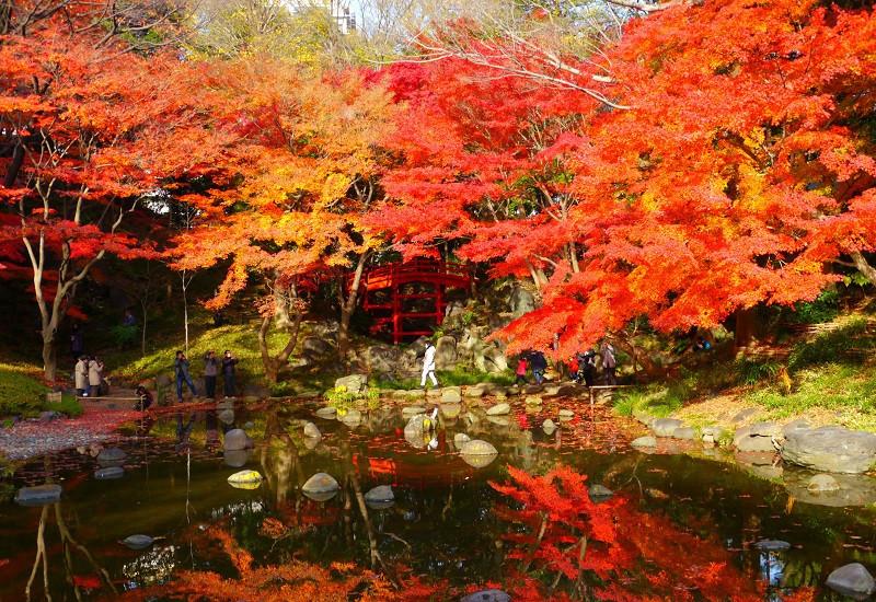 Khu vườn Koishikawa Korakuen