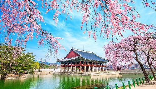 Dịch vụ visa trọn gói đi Hàn Quốc- ảnh 1