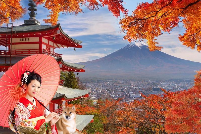 Xin visa du lịch Nhật Bản gồm những thủ tục nào? - ảnh 1